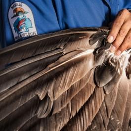 Feathers HARPO